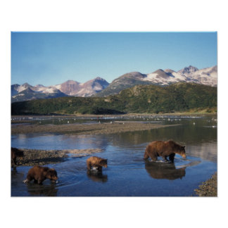 Brown bear, grizzly bear, sow and cubs in poster