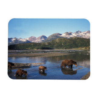 Brown bear, grizzly bear, sow and cubs in rectangular magnet