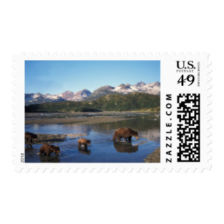 Brown bear, grizzly bear, sow and cubs in stamp