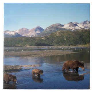 Brown bear, grizzly bear, sow and cubs in large square tile