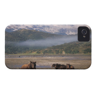 Brown bear, grizzly bear, sow fishing with cubs, iPhone 4 Case-Mate case