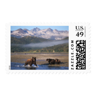 Brown bear, grizzly bear, sow fishing with cubs, postage