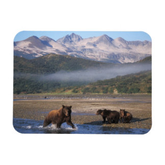 Brown bear, grizzly bear, sow fishing with cubs, magnets