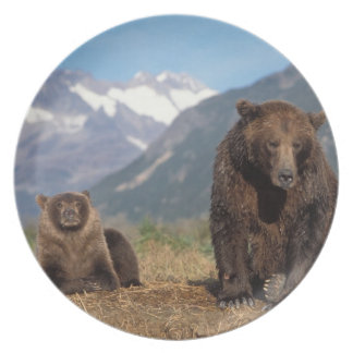 Brown bear, grizzly bear, sow with cub on dinner plate