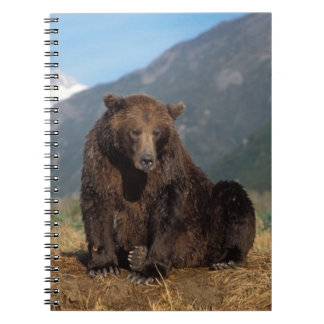 Brown bear, grizzly bear, sow with cub on spiral note books