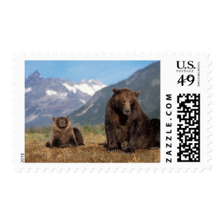 Brown bear, grizzly bear, sow with cub on postage