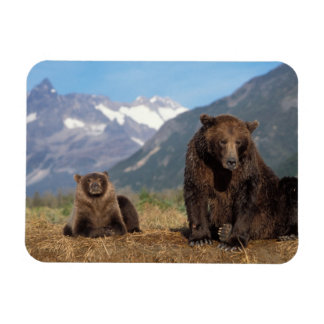 Brown bear, grizzly bear, sow with cub on vinyl magnets