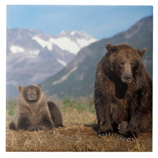 Brown bear, grizzly bear, sow with cub on large square tile