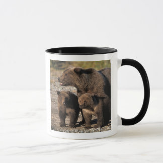 Brown bear, grizzly bear, sow with cubs looking mug