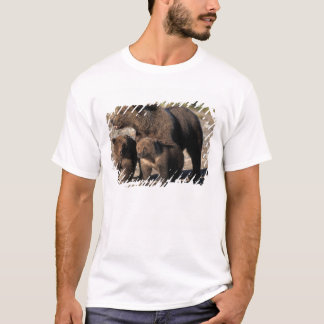 Brown bear, grizzly bear, sow with cubs looking T-Shirt