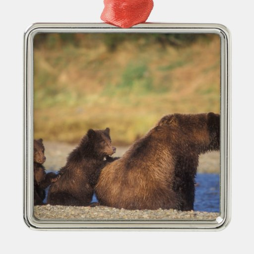 Brown bear, grizzly bear, sow with cubs, metal ornament
