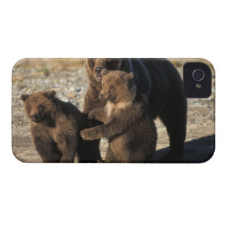 Brown bear, grizzly bear, sow with cubs on coast Case-Mate iPhone 4 case