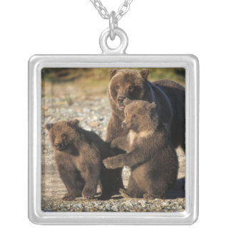 Brown bear, grizzly bear, sow with cubs on coast necklaces