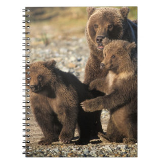 Brown bear, grizzly bear, sow with cubs on coast notebook