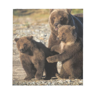 Brown bear, grizzly bear, sow with cubs on coast notepad