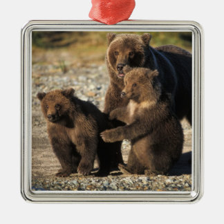 Brown bear, grizzly bear, sow with cubs on coast square metal christmas ornament