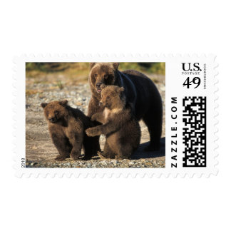 Brown bear, grizzly bear, sow with cubs on coast postage