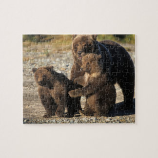 Brown bear, grizzly bear, sow with cubs on coast puzzles