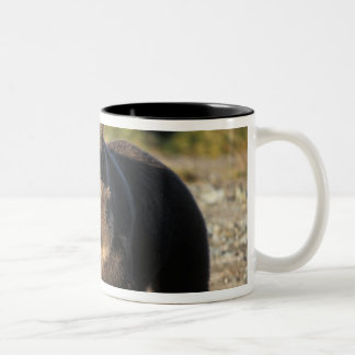 Brown bear, grizzly bear, sow with cubs on coast Two-Tone coffee mug