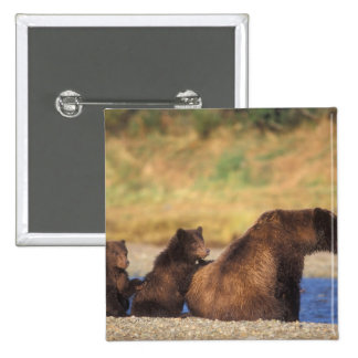 Brown bear, grizzly bear, sow with cubs, pinback button