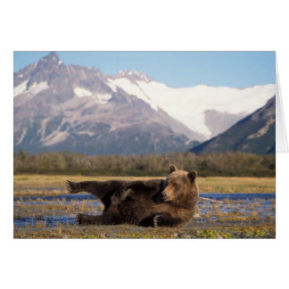 Brown bear, grizzly bear stretching on its back card