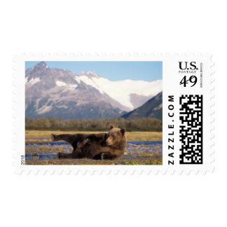 Brown bear, grizzly bear stretching on its back stamp