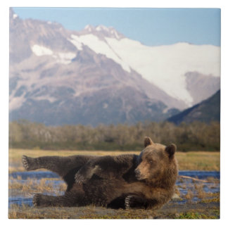 Brown bear, grizzly bear stretching on its back large square tile
