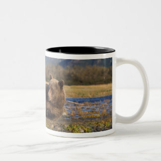 Brown bear, grizzly bear stretching on its back Two-Tone coffee mug