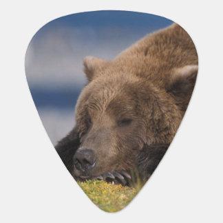 Brown bear, grizzly bear, taking a nap, Katmai Guitar Pick