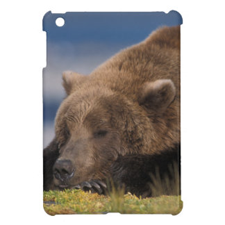 Brown bear, grizzly bear, taking a nap, Katmai Cover For The iPad Mini