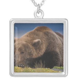 Brown bear, grizzly bear, taking a nap, Katmai Square Pendant Necklace