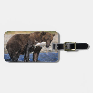 Brown bear, grizzly bear, with salmon catch, luggage tag