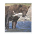 Brown bear, grizzly bear, with salmon catch, notepad