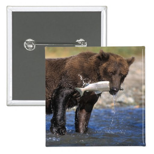 Brown bear, grizzly bear, with salmon catch, pinback button