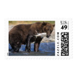 Brown bear, grizzly bear, with salmon catch, stamp