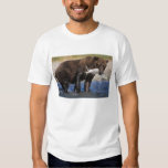 Brown bear, grizzly bear, with salmon catch, tee shirt