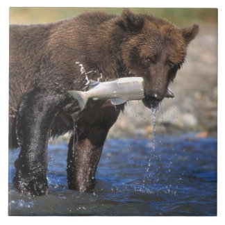 Brown bear, grizzly bear, with salmon catch, tile