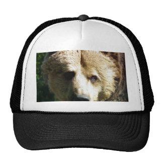Brown bear cap