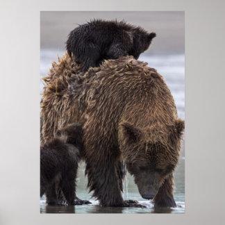 Brown Bear in Lake Clark National park Poster
