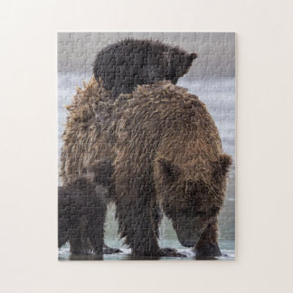 Brown Bear in Lake Clark National park Jigsaw Puzzle
