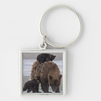 Brown Bear in Lake Clark National park Silver-Colored Square Keychain