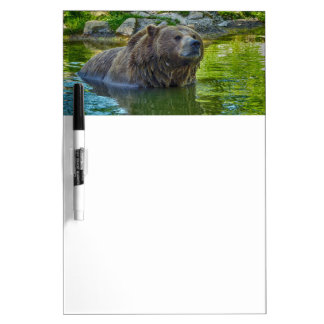 Brown bear in water Dry-Erase board