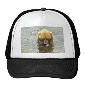 Brown bear in water trucker hats
