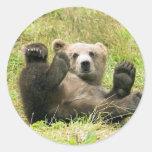 Brown Bear Kodiak Cub Gifts Sticker