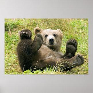 Brown_Bear_Kodiak_Cub_NWR Print