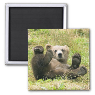 Brown_Bear_Kodiak_Lovers Gifts 2 Inch Square Magnet