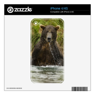 Brown bear, male, fishing for salmon iPhone 4S decal