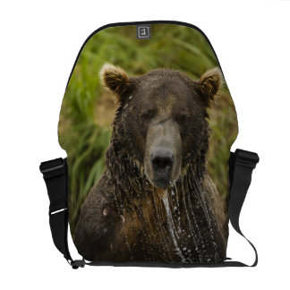 Brown bear, male, fishing for salmon messenger bag