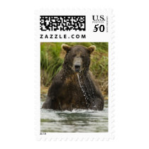 Brown bear, male, fishing for salmon postage