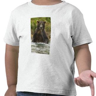 Brown bear, male, fishing for salmon t shirts